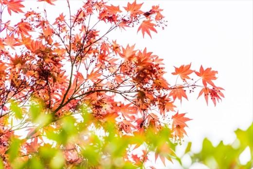 伊奈波神社 岐阜県 岐阜市 結婚式 写真 持ち込み カメラマン