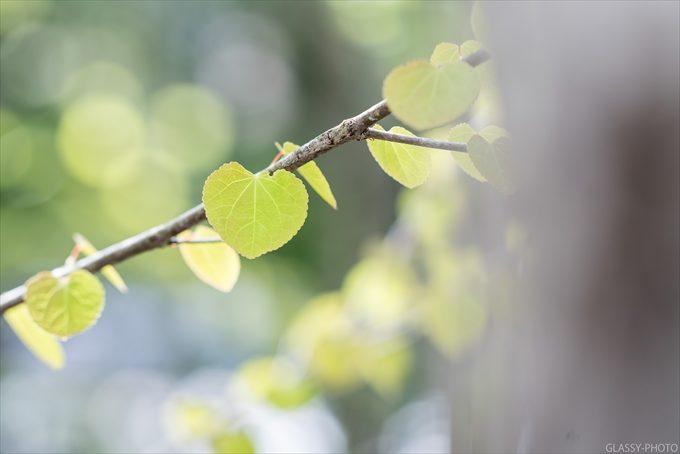 敷地内の木にはハート型の葉っぱがついていて可愛い!