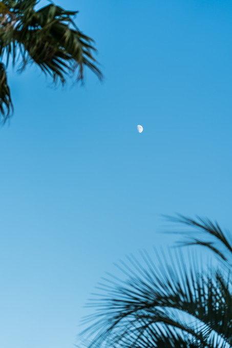 夕方の半月が高い空にくっきりと見えてきました