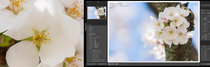 セカンドディスプレイのルーペ表示で拡大した画像がボケていない状態(正常な状態)